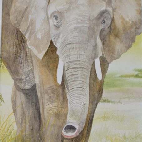 African Elephant watercolor painting by Jim Watters