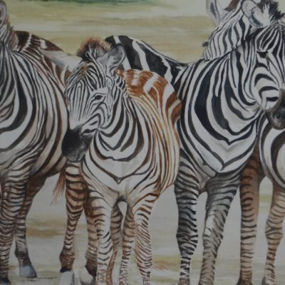 Dazzle of Zebras watercolor painting by Jim Watters