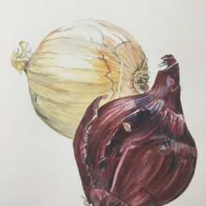Onions watercolor painting by Jim Watters