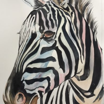 Color Burst Zebra