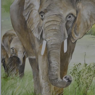 African Elephant and Calf Color